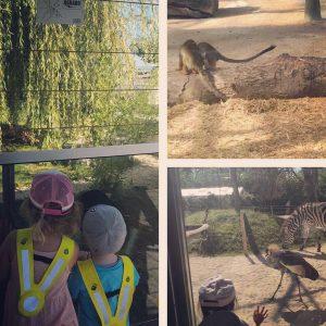 Besuch im Toni's Zoo